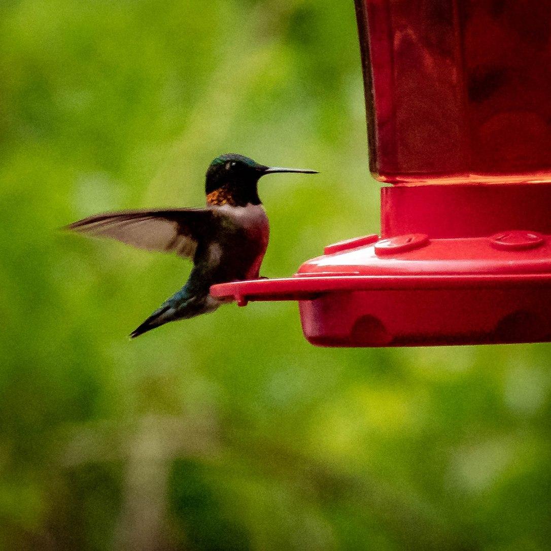 05-28-19almostflying