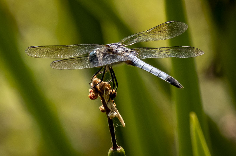 6_08_19dragonfly