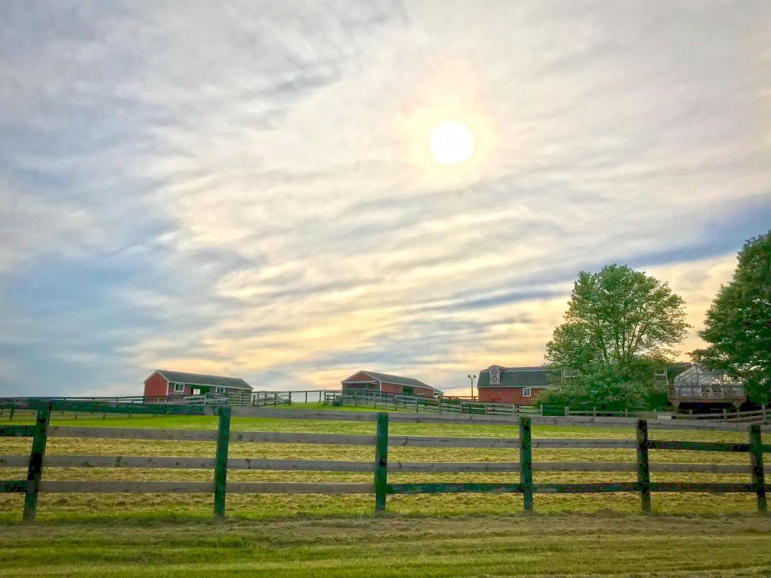 afternoonfarm