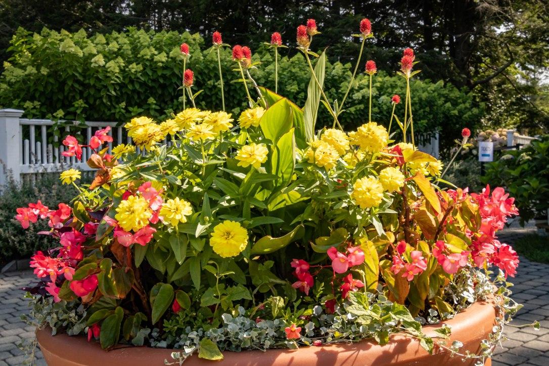 HPentryflowers