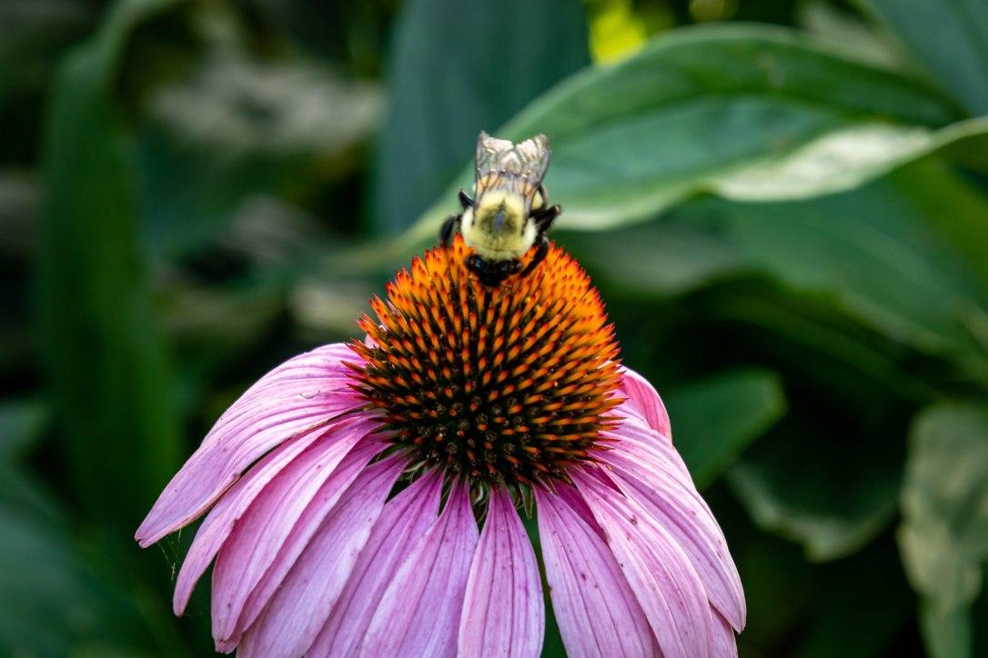 HPpinkflowerbee