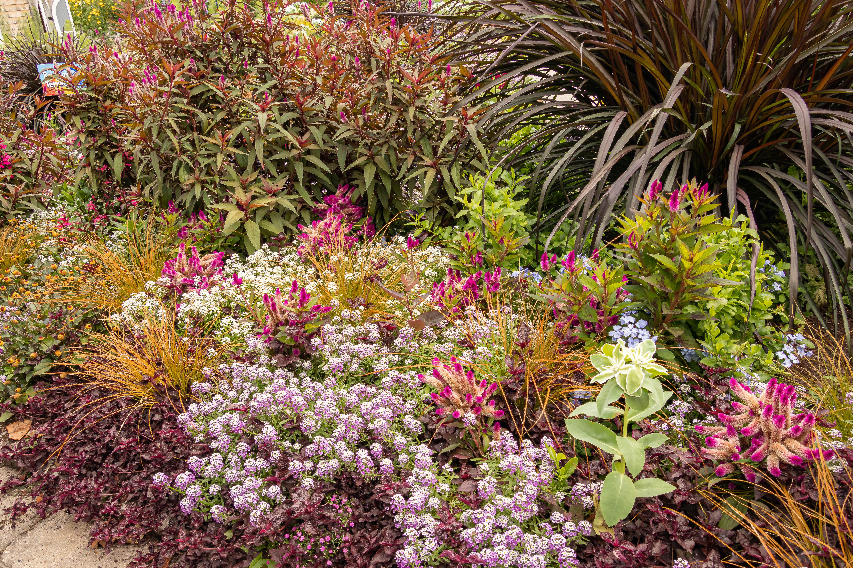 flowersandbugsgarden