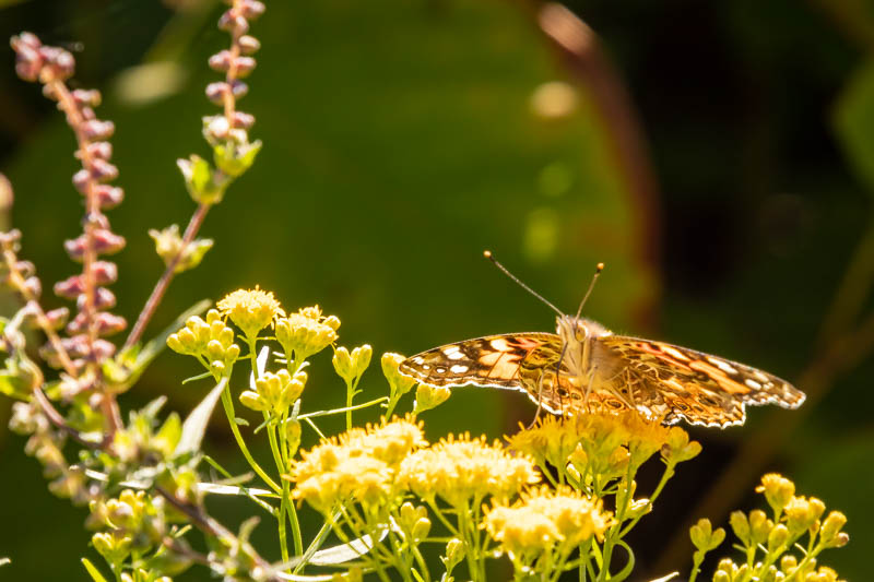9-22butterfly