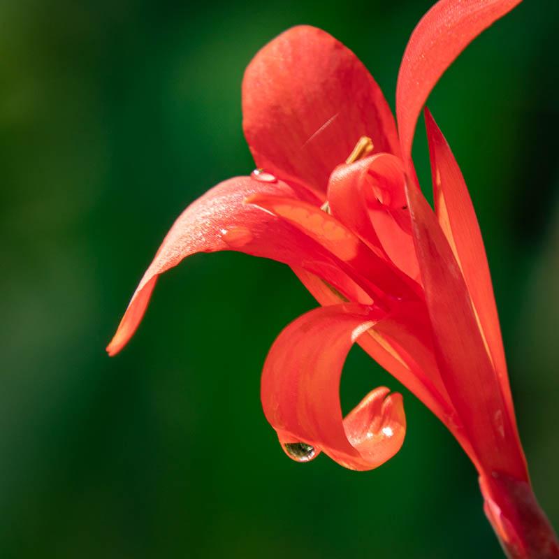 12-10redflower