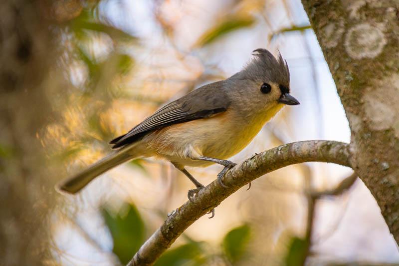 12-26graybird