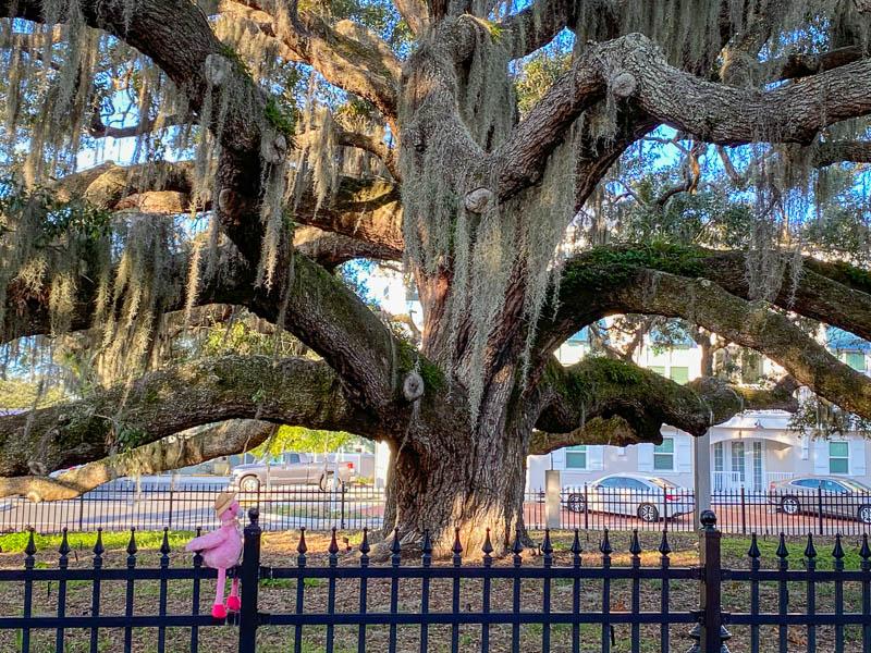 1-2-20safetyharbortree