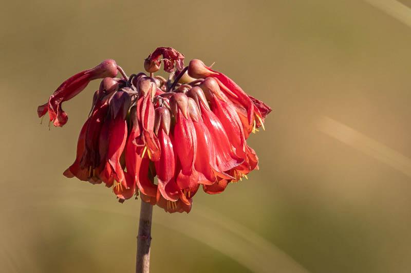 1-22-20pinkflower