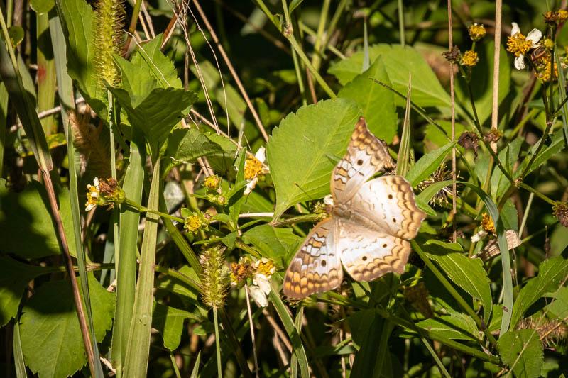 1-6-20butterfly