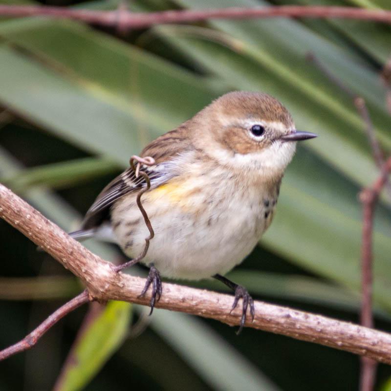 02-03-20littlebird.jpg