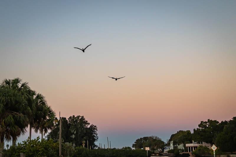 02-09-20moonbirds
