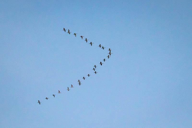 02-25-20flyingvee