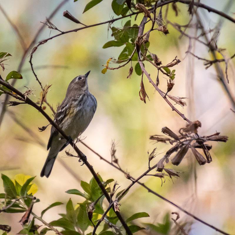 02-25-20littlebird