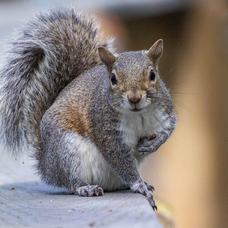 02-25-20squirrel