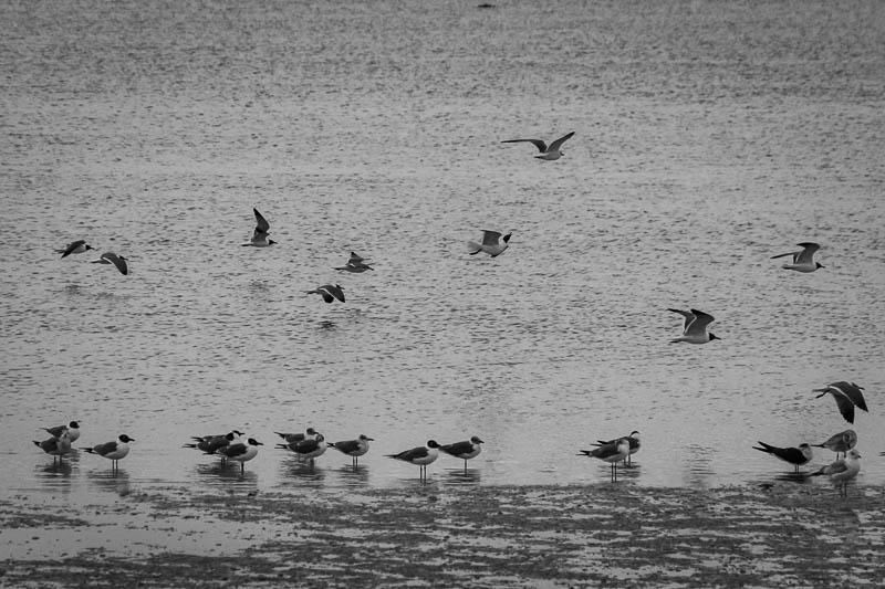 03-09-20pineislandgulls