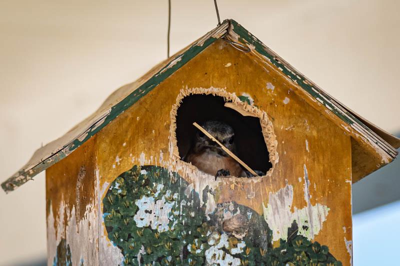 03-16-20serenitybirdhouse
