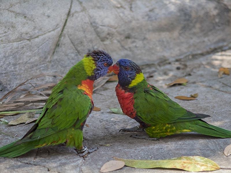 3-28lovebirds
