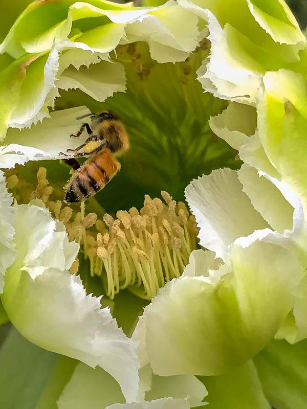 04-01-20cactusflower5