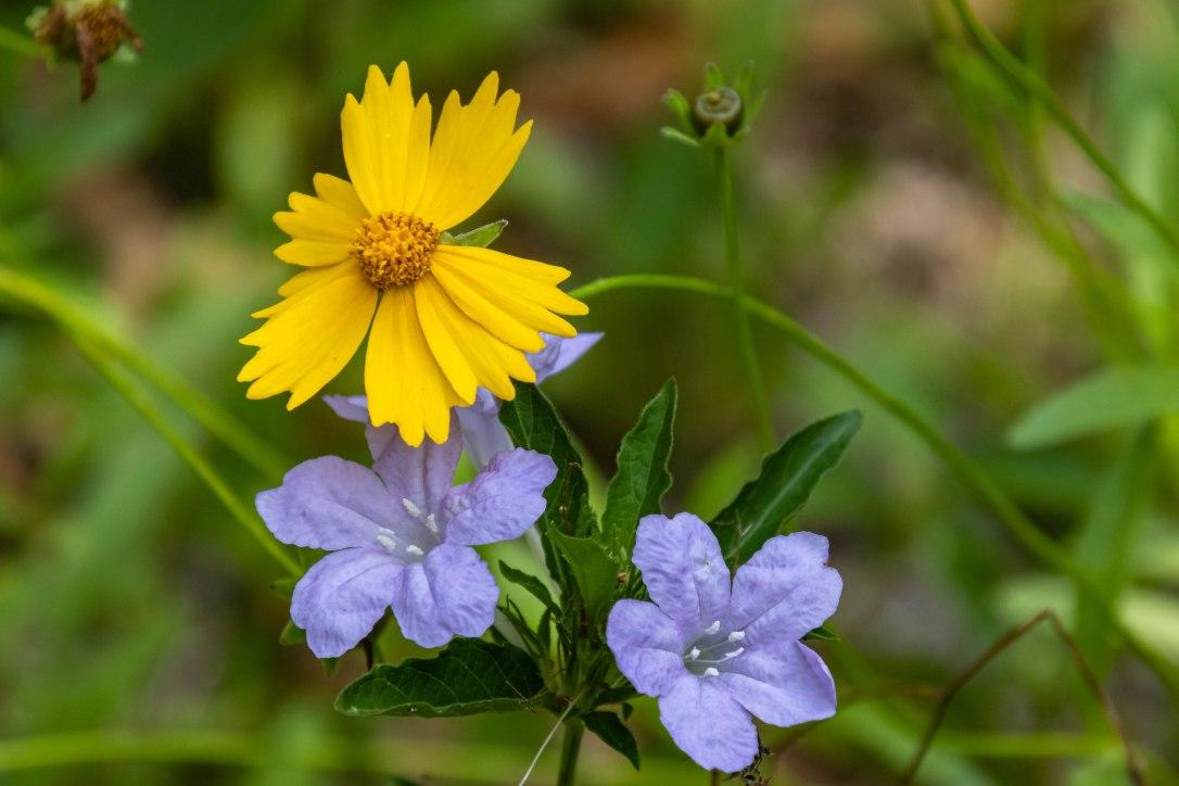 04-08-203flowers.jpg