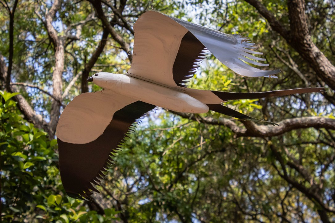 04-08-20swallowtailkite.jpg