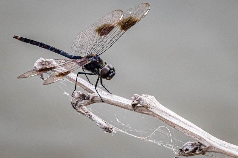 04-16-20dragonfly.jpg