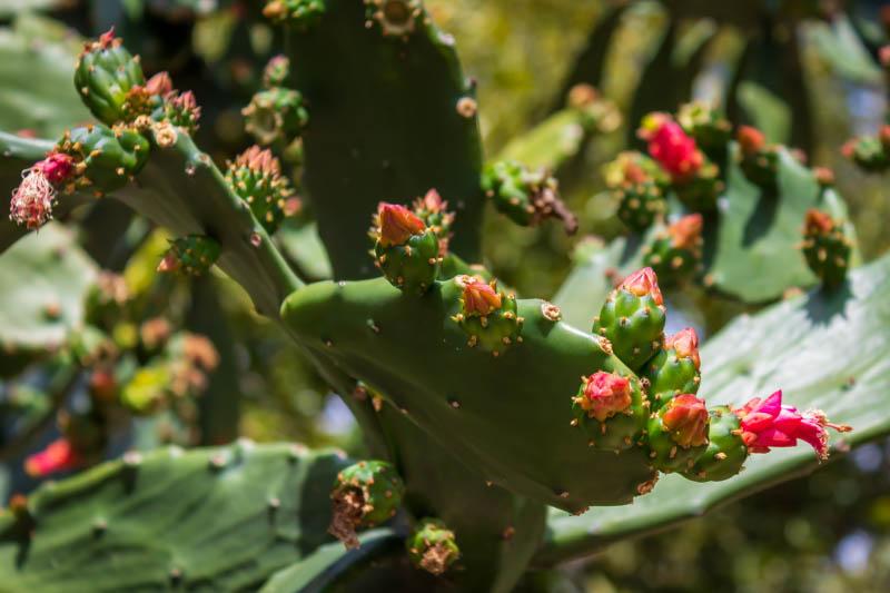 04-19-cactusfloer