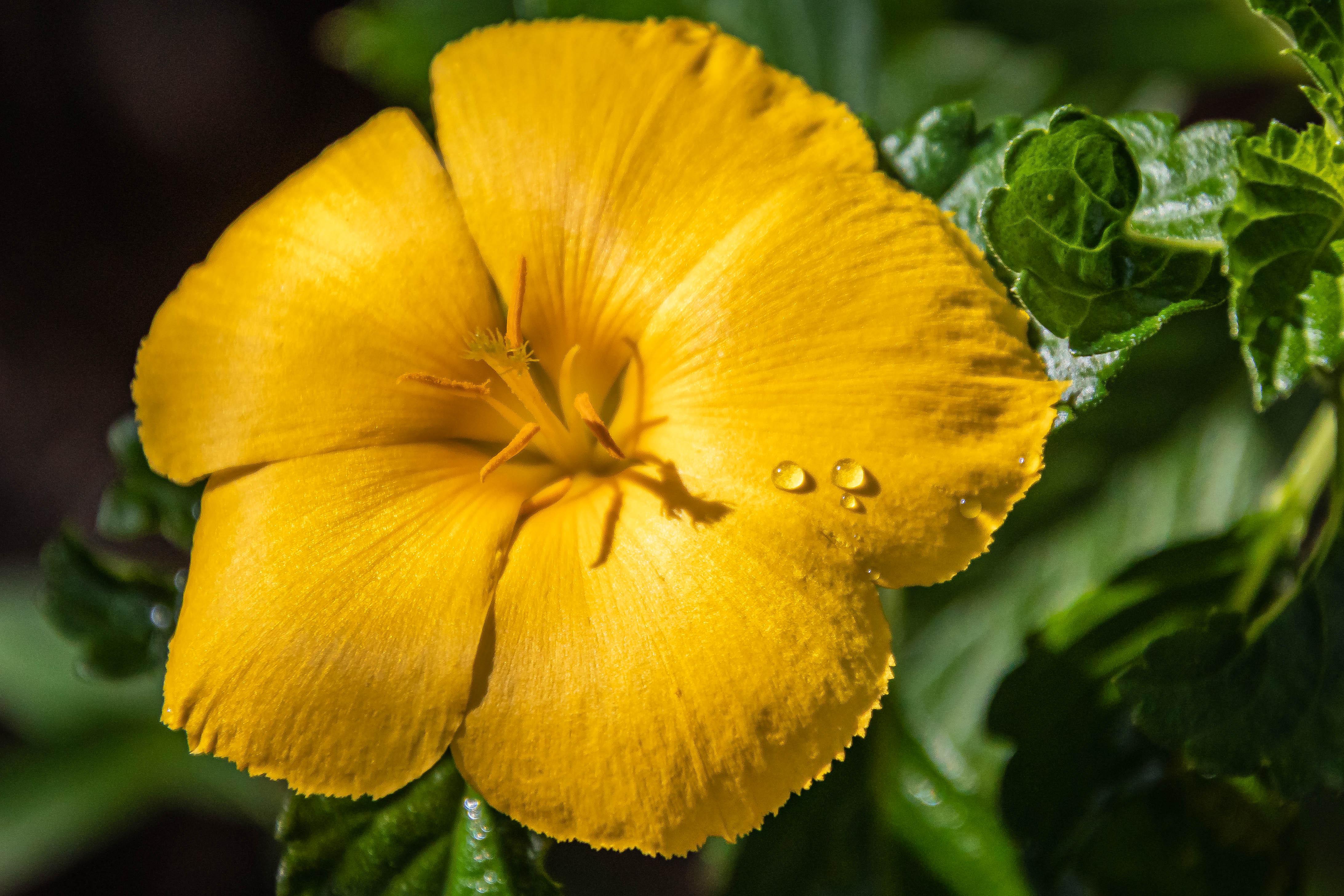 05-19-20yellowflower