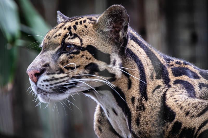 05-29-20leopard2