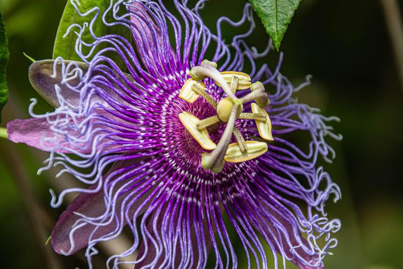 06-13-20assinflower