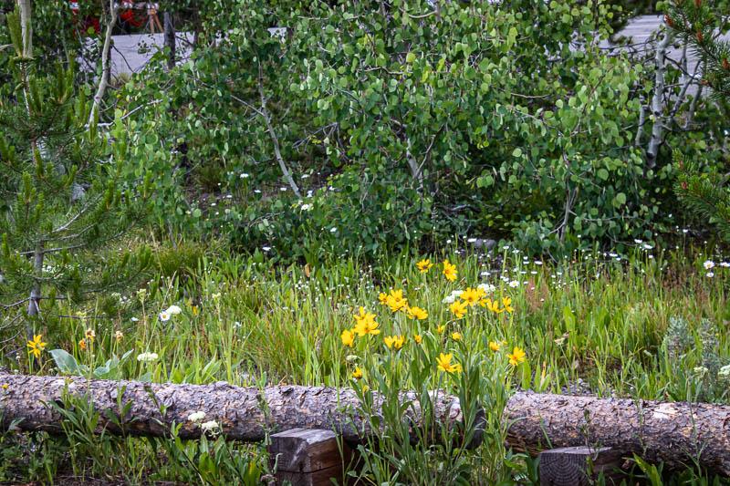07-07-07flowers2