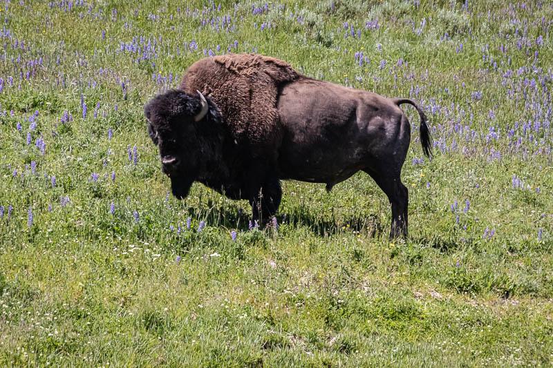 07-10-20part2buffalo