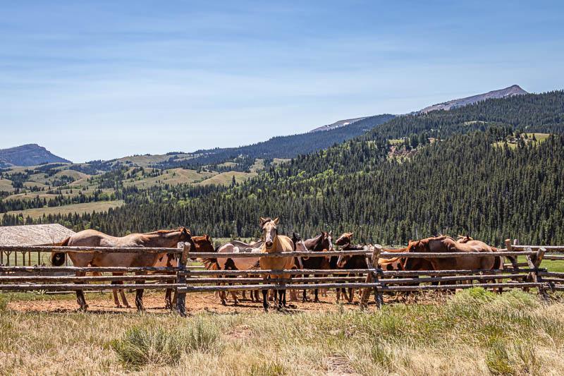 07-19-20moosehorses