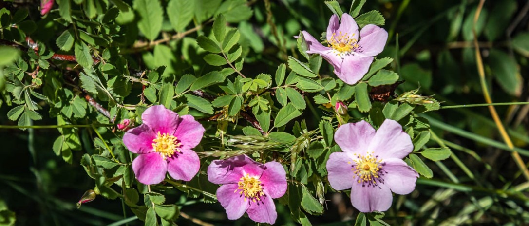 07-1s-20flowerfeature