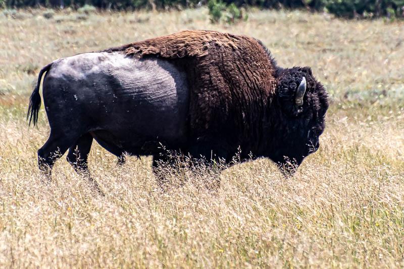 07-26-20hotspringsbuffalo